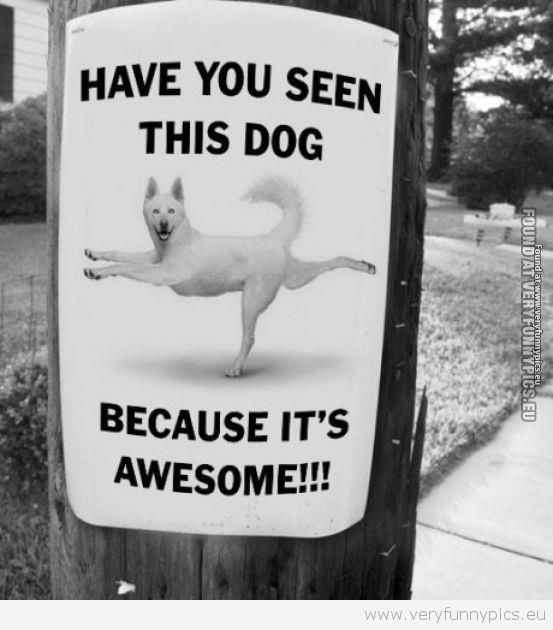 Awesome dog