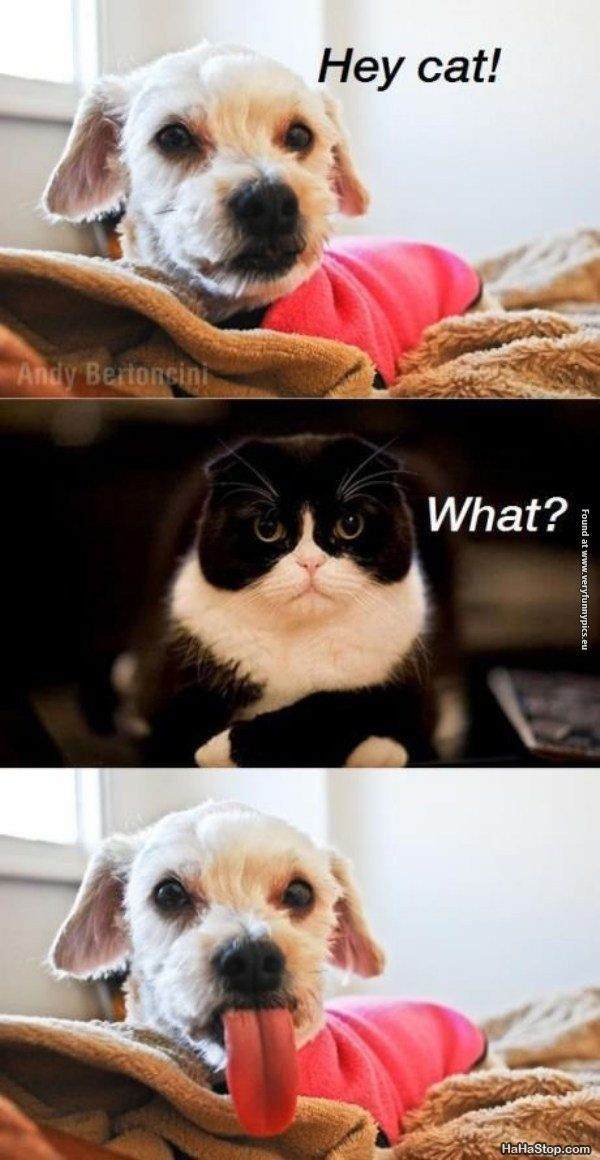 Not a catlover