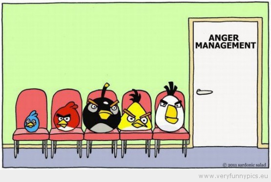 Funny Picture Angry Birds Anger Management