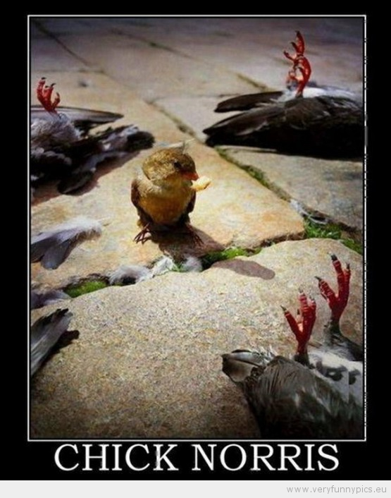 Funny Picture - Chick Norris
