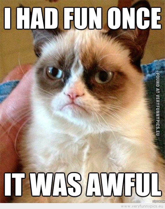 Funny Picture - The worlds grumpiest cat had fun once it was awful