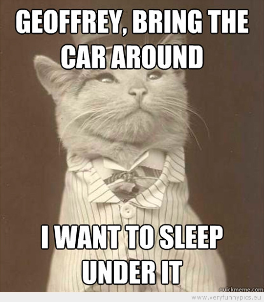 Funny Picture - Aristocat-Geoffrey bring the car around i want to sleep under it