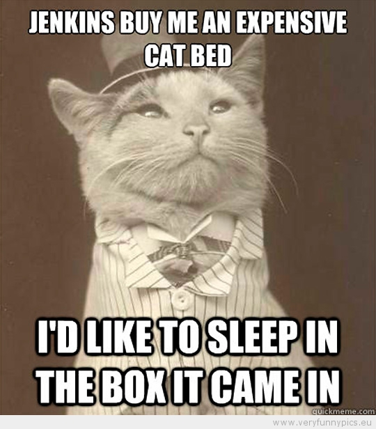 Funny Picture - Aristocat-Jenkins by me an expensive cat bed i'd like to sleep in the box it came in