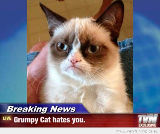 Funny Picture - Grumpy cat hates you