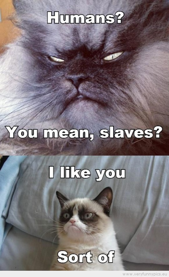 Funny Picture - Grumpy cat human you mean slaves i like you sort of