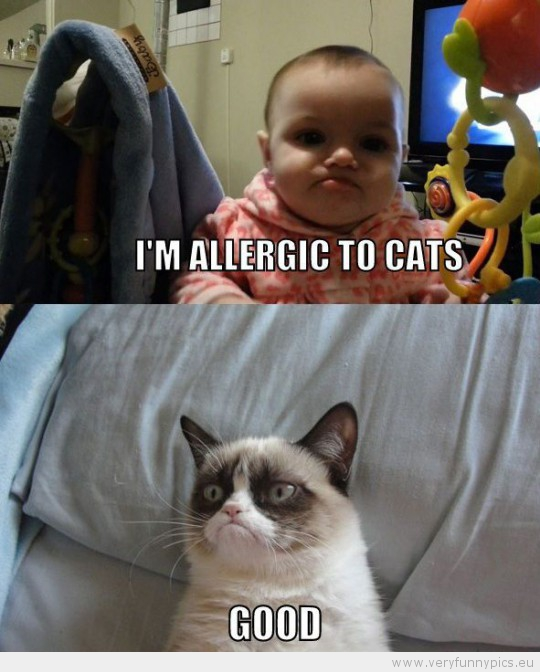 Funny Picture - Grumpy cat kid is allergic to cats good