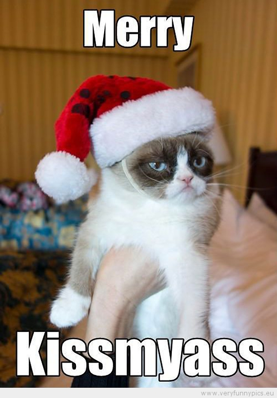 Funny Picture - Grumpy cat merry kissmyass