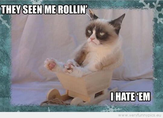 Funny Picture - Grumpy cat they seen me rollin i hate them