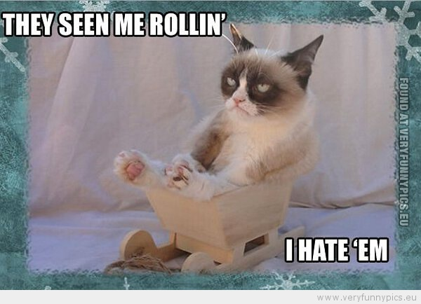 Grumpy Cat gallery (14 pictures)