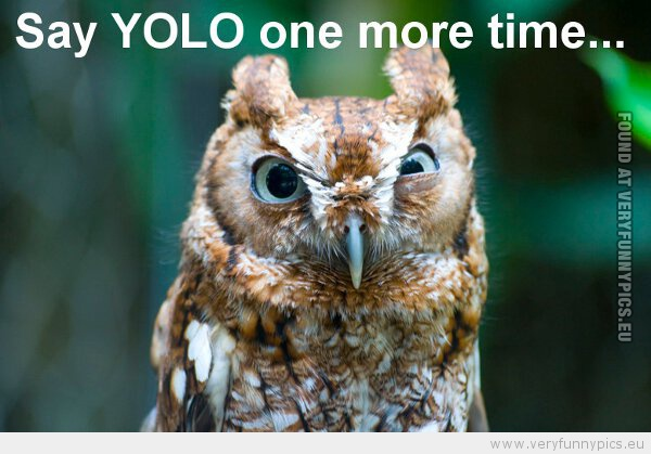 Say Yolo One More Time Very Funny Pics