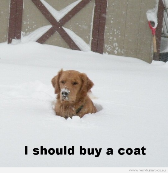 Funny Picture - Dog in snow - I should buy a coat