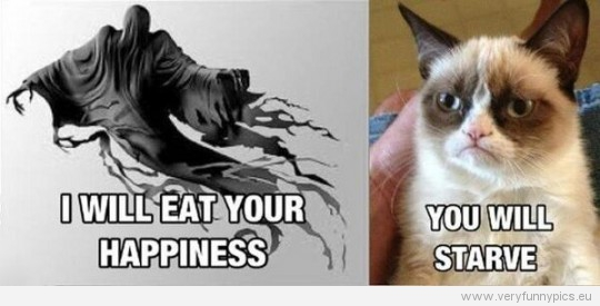 Funny Picture - I will eat your happiness - You will starve grumpy cat
