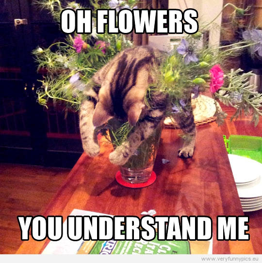 Funny Picture - Oh flowers you understand me