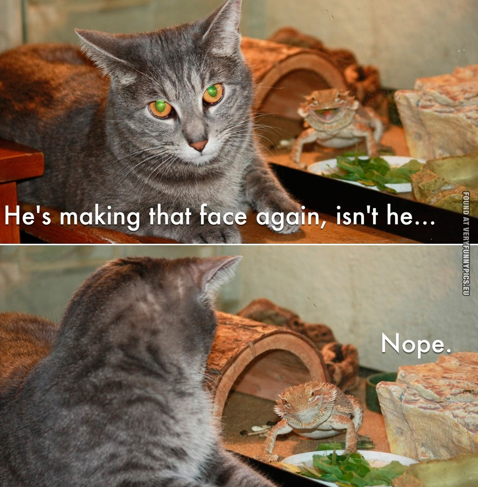 Funny Picture - He's making that face again, isn't he - Cat