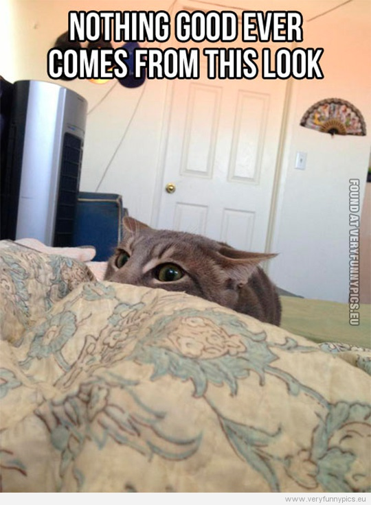 Funny Picture - Nothing good ever comes from this look - Funny looking cat