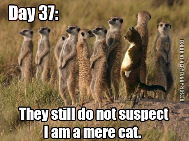 Funny Picture - Day 37: They still do not suspect i am a mere cat