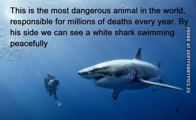 The Most Dangerous Animal In World