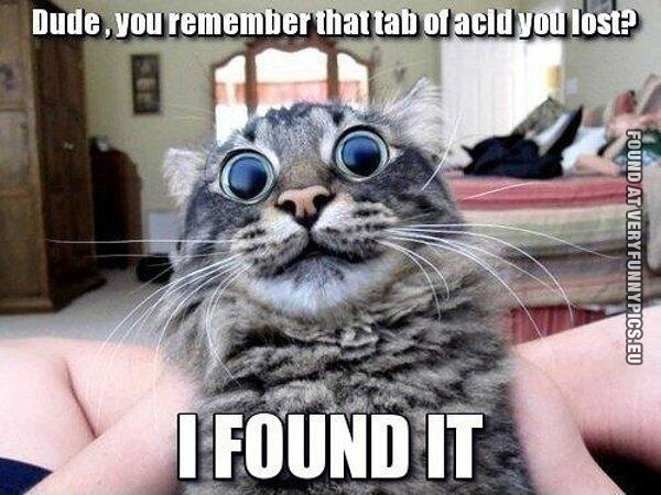 Cat on dope | Very Funny Pics