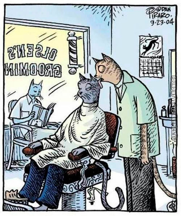 At the cat hairdresser