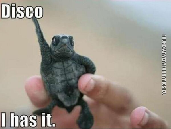 Just a disco turtle