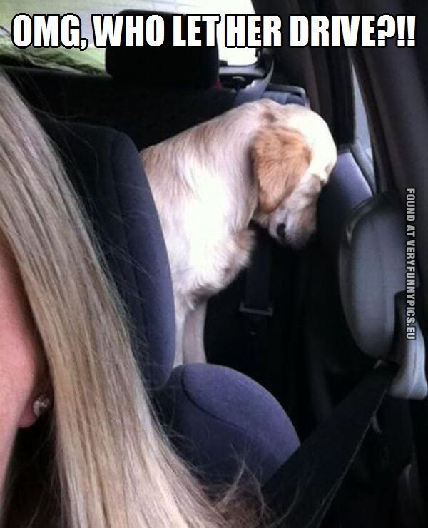 Dogs don't like women drivers