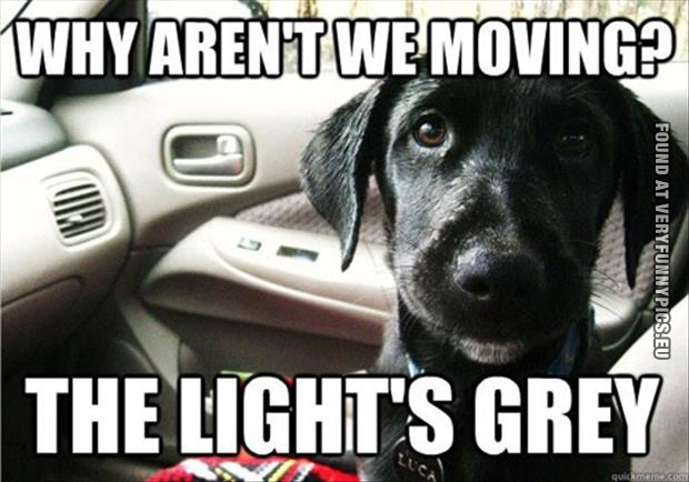 Why dogs don't drive