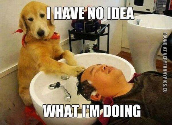 Just a dog hairdresser
