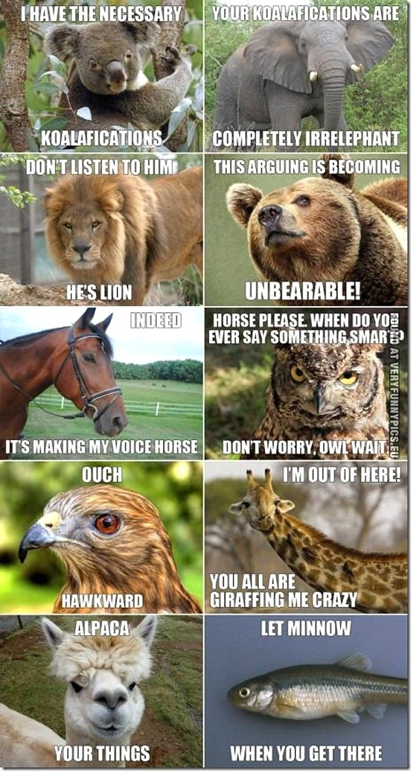 The best animal wordplay picture ever