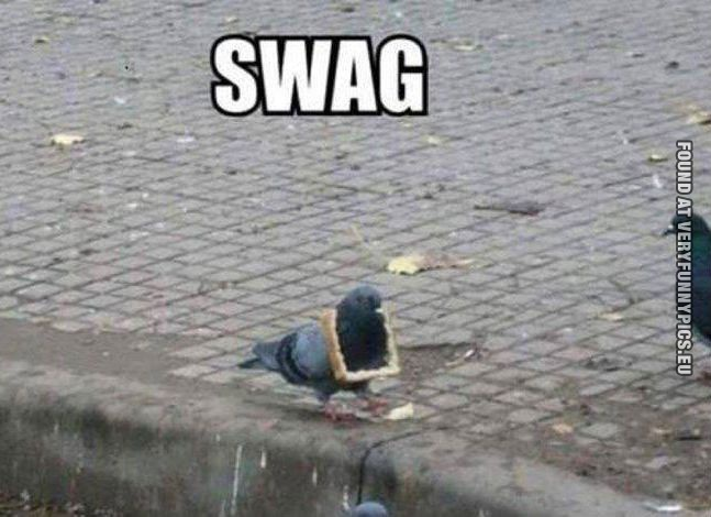 funny picture pigeon swag
