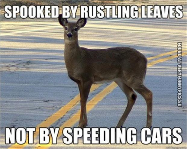 funny picture scared deer