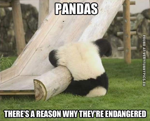 Why pandas endangered very funny pics funny picture a reason why pandas endagered voltagebd Choice Image