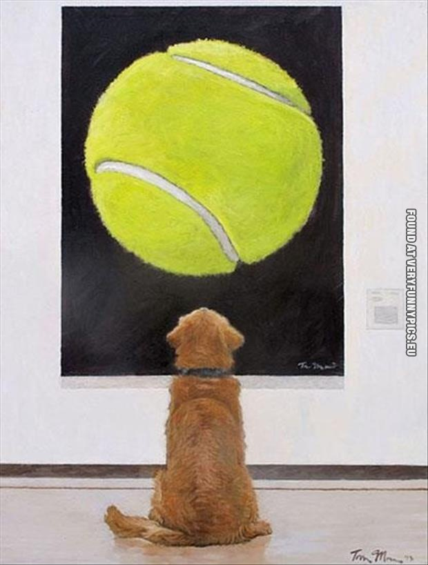 funny picture dog watchin ball painting