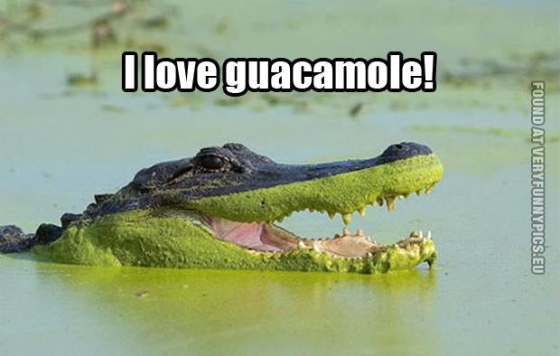 We all love guacamole