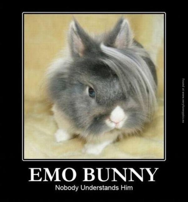 Nobody understands this bunny
