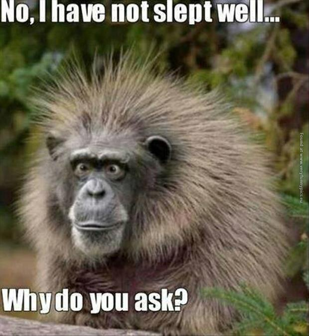 A very tired monkey