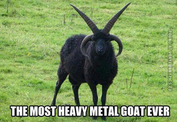 funny pics the most heavy metal goat ever