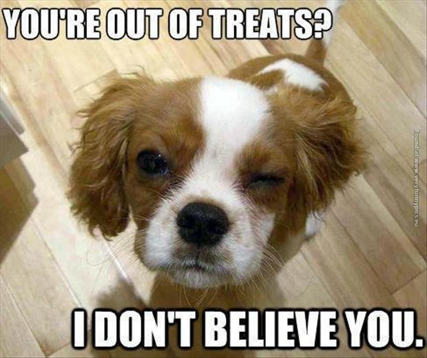 funny pics out of treats