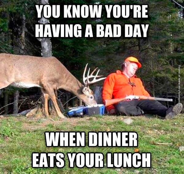 When dinner eats your lunch