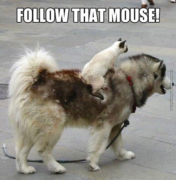 Funny Cat Pictures Follow That Mouse