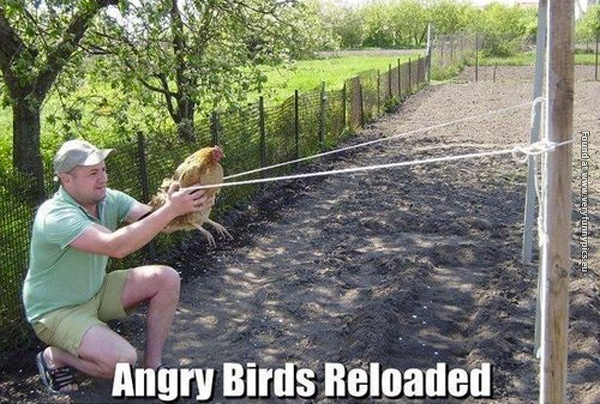 Angry Birds – Redneck edition