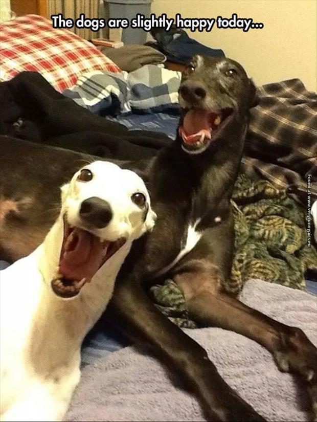 Slightly happy dogs
