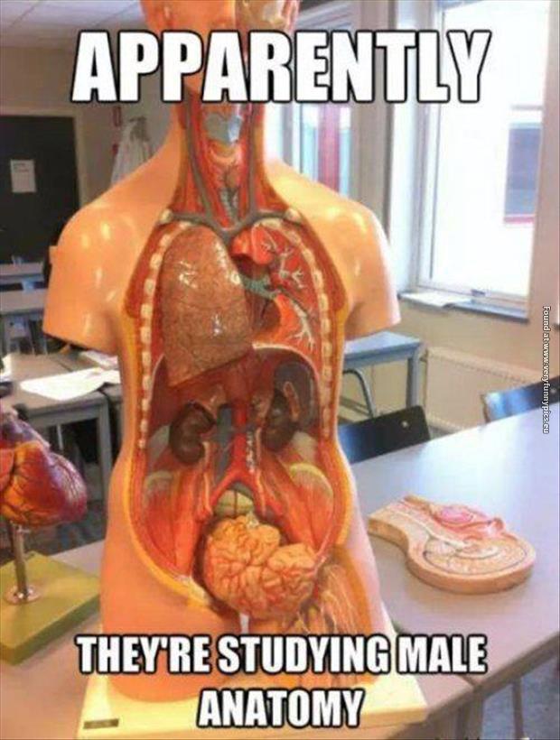 Anatomy Archives | Very Funny Pics