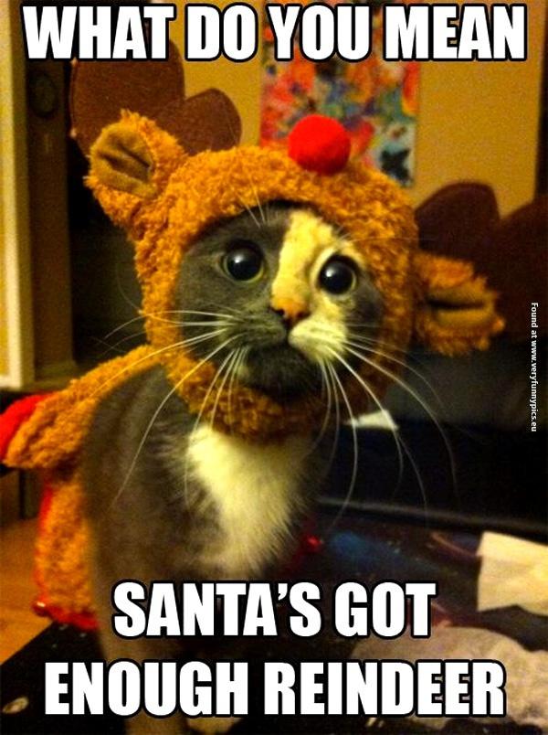 Santa's new little helper