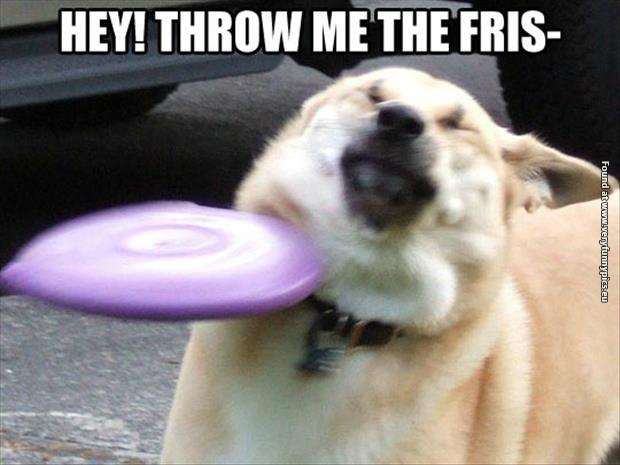 funny pictures dog throw me the frisbee whenever someone throws me a frisbee very funny pics