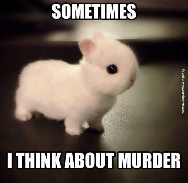 Killer Bunny is so cute