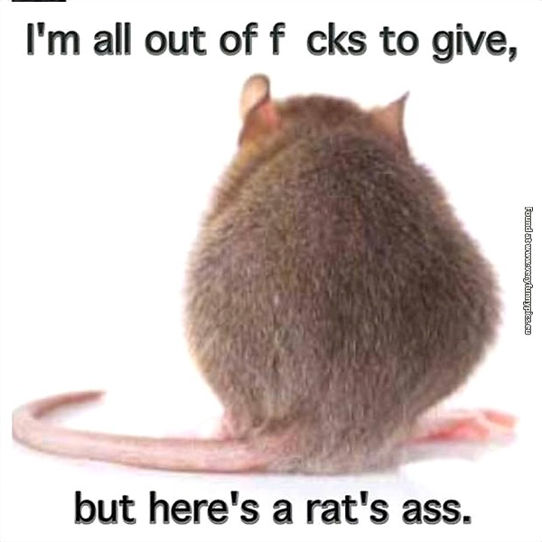 Image result for rats funny