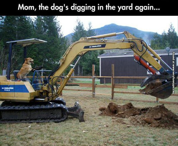funny pictures the dog is digging in the back yard