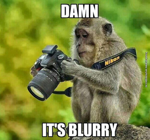 Monkey photographer