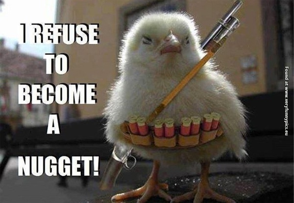 Chicken Jokes For Adults: Very Funny Pics
