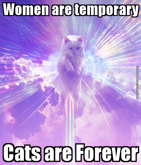 funny-pictures-men-are-temporary-cats-are-forever